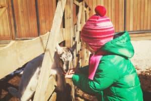 child feeding a baby goat